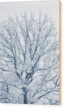 Wood Print featuring the photograph lonely Oak tree in snowy, misty landscape by Christian Lagereek