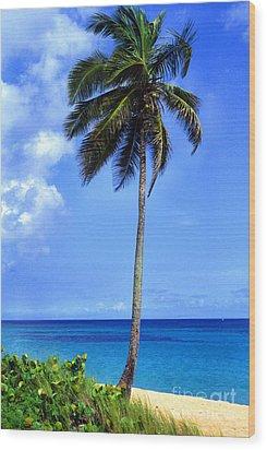Lonely Palm Tree Los Tubos Beach Wood Print by Thomas R Fletcher