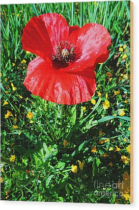 Lonely Poppy Wood Print by Don Pedro De Gracia