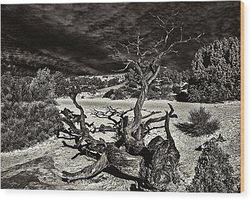 Lonely Tree #4  Wood Print by Alex Galkin