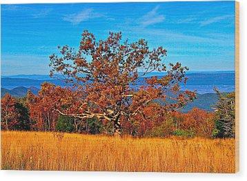 Lonely Tree Skyline Drive Va Wood Print by The American Shutterbug Society