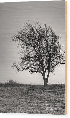Lonesome Tree Wood Print by Tamyra Ayles