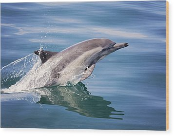 Long Beaked Common Dolphin Wood Print