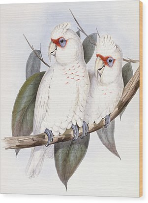 Long-billed Cockatoo Wood Print by John Gould