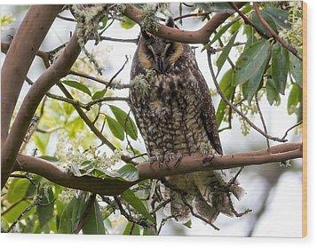 Long-eared Owl Wood Print by David Gn