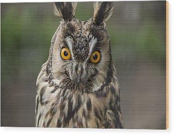 Long-eared Owl Wood Print by Martina Fagan