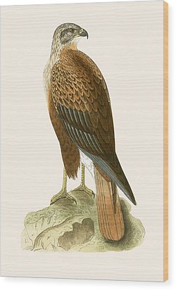 Long Legged Buzzard Wood Print by English School