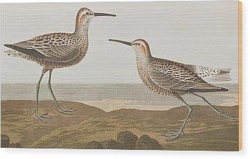 Long-legged Sandpiper Wood Print by John James Audubon