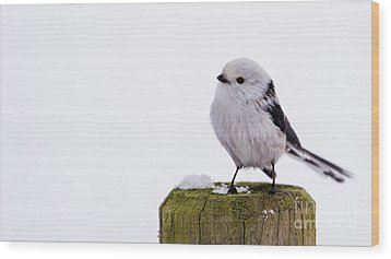 Long-tailed Tit On The Pole Wood Print by Torbjorn Swenelius