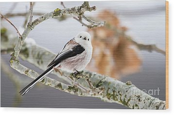 Long-tailed Tit Wood Print by Torbjorn Swenelius