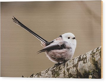 Long-tailed Tit Wag The Tail Wood Print by Torbjorn Swenelius