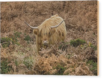 Longhorn On Dartmoor Wood Print