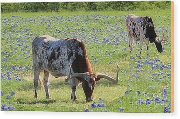 Longhorns In The Bluebonnets Wood Print