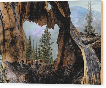 Look Into The Heart Wood Print by Jim Hill