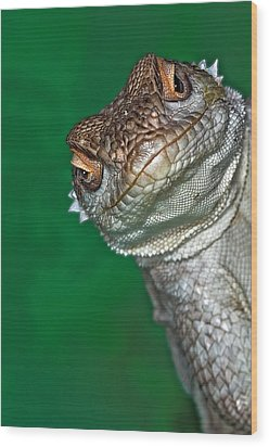 Look Reptile, Lizard Interested By Camera Wood Print by Pere Soler