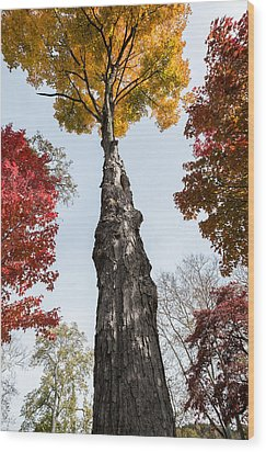 Look Up Wood Print by Glenn DiPaola