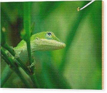 Look Up Lizard Wood Print