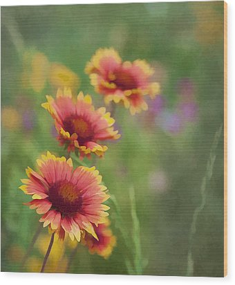 Wood Print featuring the photograph Look...a Flower by John Crothers