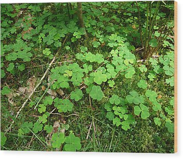 Looking For A Four-leaf Clover Wood Print by Valerie Ornstein