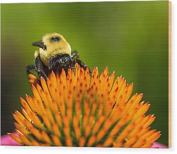 Looking For Nectar Wood Print