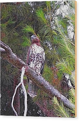 Looking For Prey - Red Tailed Hawk Wood Print