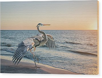 Looking For Supper Wood Print by Brian Tarr