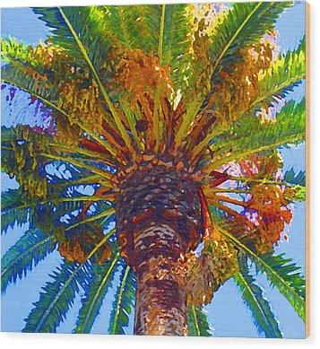 Looking Up At Palm Tree  Wood Print by Amy Vangsgard
