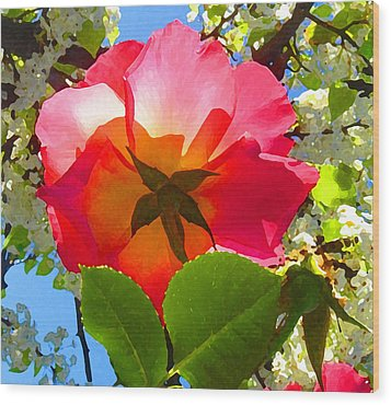 Looking Up At Rose And Tree Wood Print by Amy Vangsgard