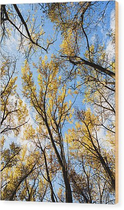 Looking Up Wood Print by Bill Kesler
