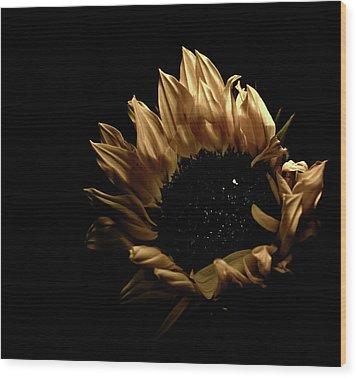 Wood Print featuring the photograph Looking Up by Sheryl Thomas