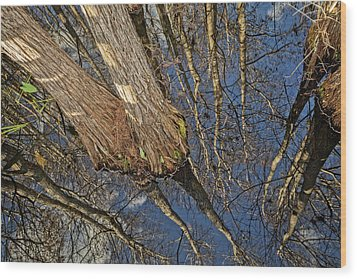 Wood Print featuring the photograph Looking Up While Looking Down by Debra and Dave Vanderlaan
