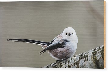 Wood Print featuring the photograph Loong Tailed by Torbjorn Swenelius