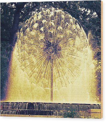 Loring Fountain Wood Print by Rashelle Brown