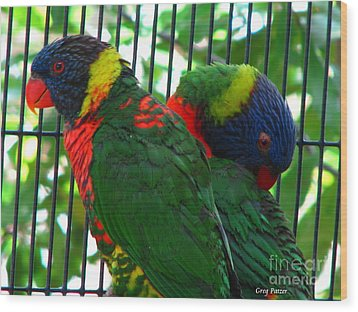 Wood Print featuring the photograph Lory by Greg Patzer