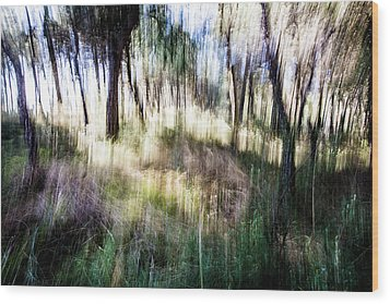 Lost In The Woods Wood Print