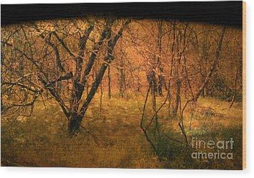 Lost Wood Print by Jayme X
