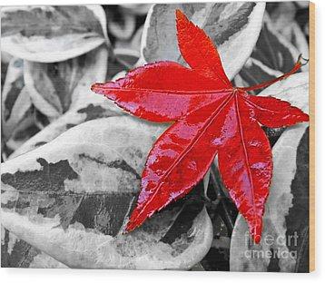 Lost Wood Print by Kaye Menner