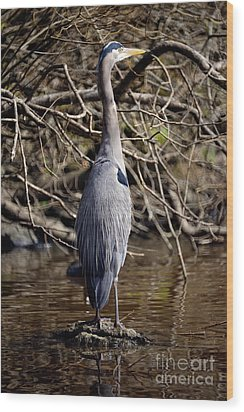 Wood Print featuring the photograph Lost Lagoon Great Blue Heron 3 by Terry Elniski