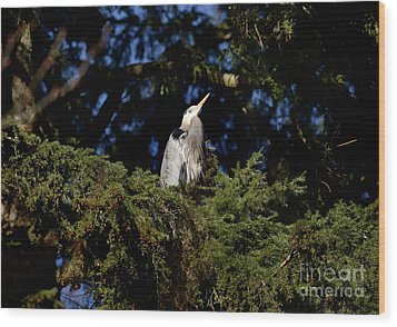 Wood Print featuring the photograph Lost Lagoon Great Blue Heron 5 by Terry Elniski