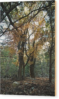 Wood Print featuring the photograph Lost Maples State Park Tree 41 by Karen Musick