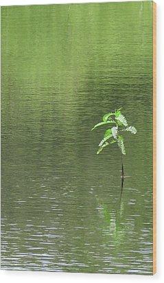 Lost Wood Print by Rosalie Scanlon
