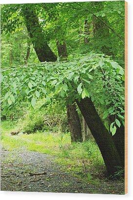 Lost Trail Wood Print by Fareeha Khawaja
