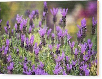 Wood Print featuring the photograph Lots Of Lavender  by Saija Lehtonen