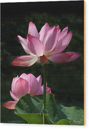 Lotus Beauties--upstaged Dl048 Wood Print