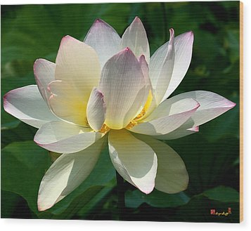Lotus Beauty--disheveled Dl061 Wood Print
