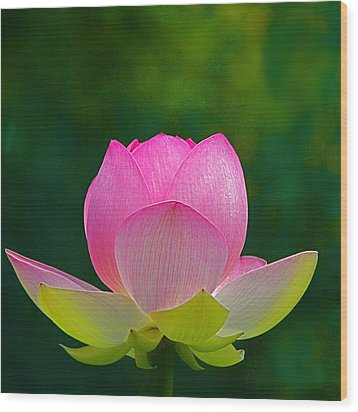 Wood Print featuring the photograph Lotus Blossom 842010 by Byron Varvarigos