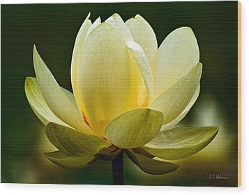 Lotus Blossom Wood Print by Christopher Holmes