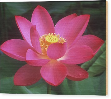 Lotus Blossom Wood Print by Elvira Butler
