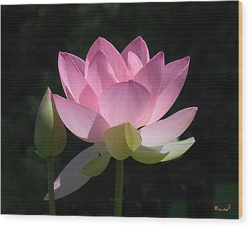 Lotus Bud--snuggle Bud Dl005 Wood Print