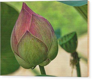 Lotus Dreaming 3 Wood Print